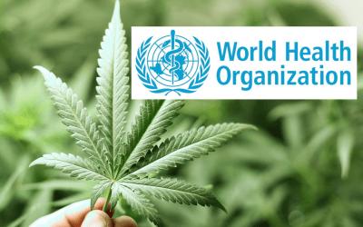 La OMS recomienda una nueva clasificación para el Cannabis